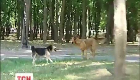 В Киеве пенсионерку покусал дворовый пес