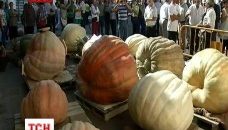 Іспанські фермери помірялися гарбузами