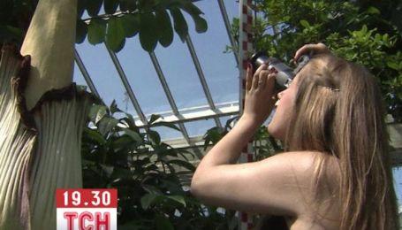 У Бельгії розцвіла 50-кілограмова найсмердючіша квітка в світі