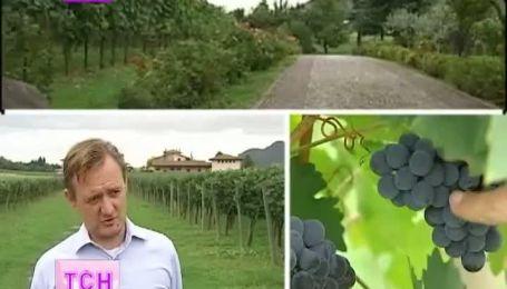 На севере Италии празднуют начало нового винного года