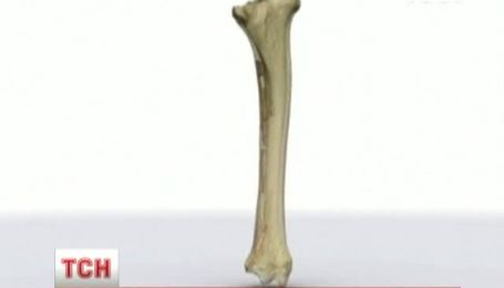 Канадские ученые нашли останки верблюдов в Антарктике