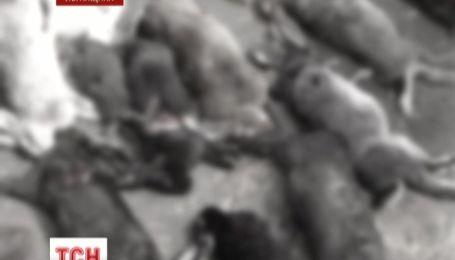 Невідома тварина лютує на Луганщині