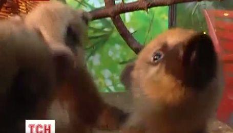 В семье носух евпаторийского тропик-парка пополнение