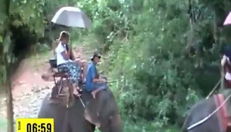 Сегодня во всем мире отмечают день защиты слонов в зоопарках