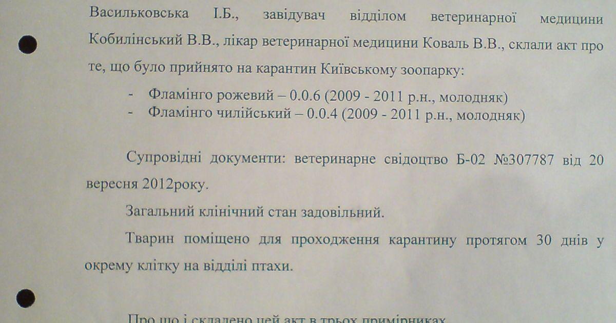 У Київському зоопарку загубили рідкісних фламінго @ Фраза