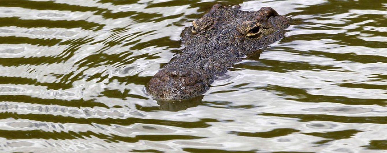 Крокодил змусив австралійця три дні сидіти на острові