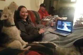Две собаки стали звездами Интернета, пообщавшись по Skype (видео)