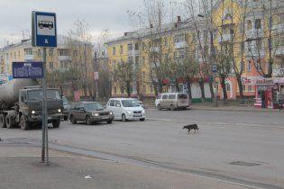 У Черкасах пес 5 років чекає свого господаря на зупинці