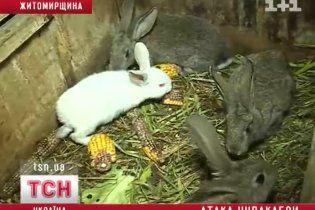 На Житомирщине чупакабра рассортировала убитых кроликов по росту и цвету