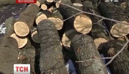 Пильність селян врятувала ліс на Полтавщині