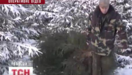 Лесничие вымогали у предпринимателя взятку за елки по существенно заниженной стоимости