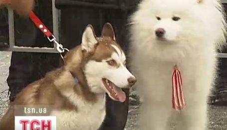 Чемпионат северных собак состоялся в Украине