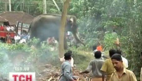 В одном из храмов индийского штата Керала слон растерзал своего смотрителя