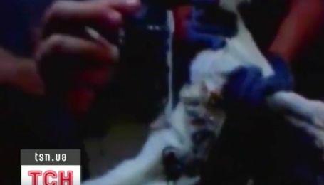 В Бразилии кот пытался помочь арестанту сбежать из тюрьмы
