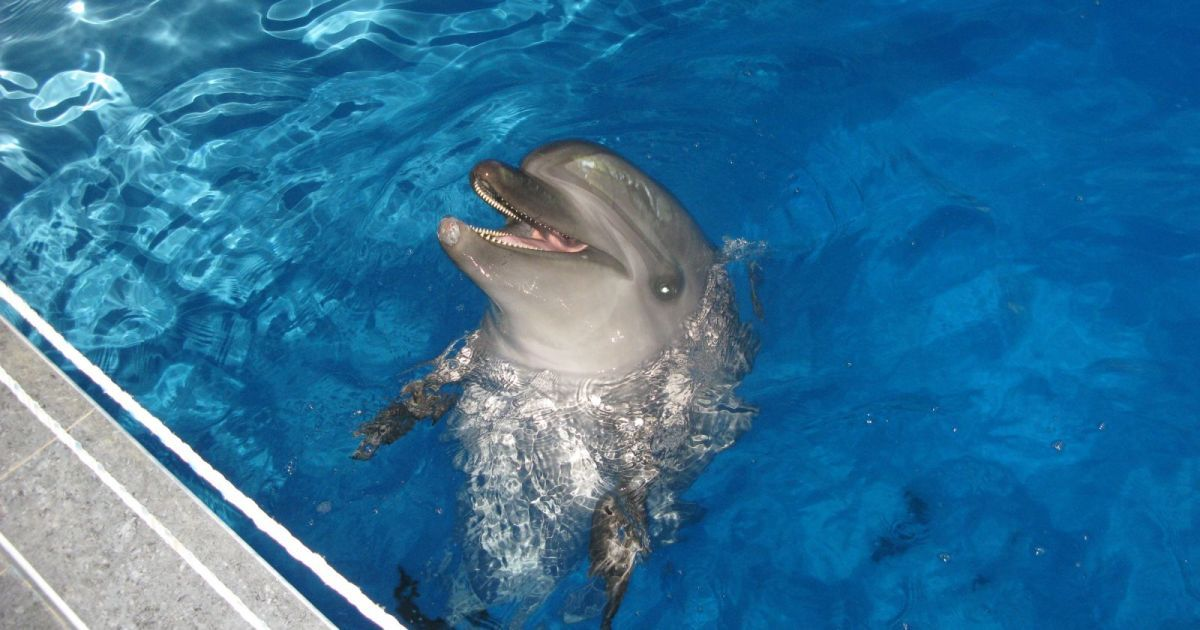 Донецкие дельфины и морские котики переехали в Харьков @ Городской дозор