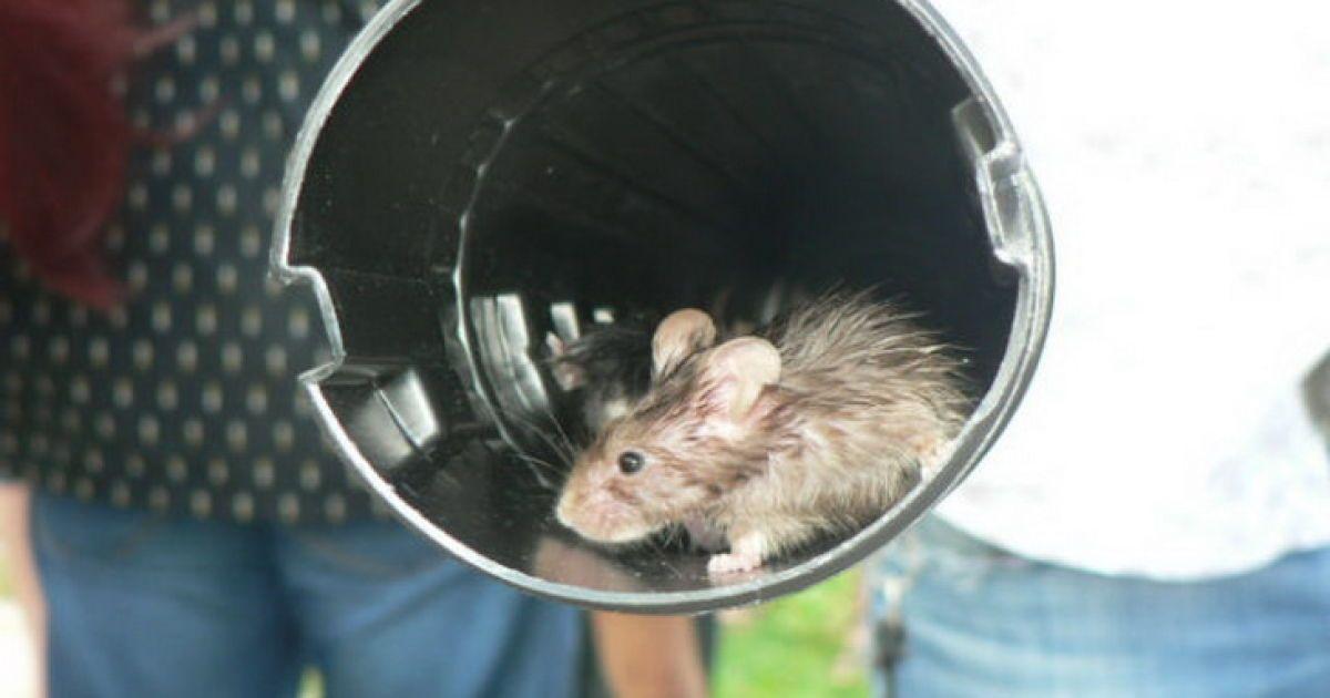 Активисты принесли в магазин во Львове 46 живых мышей. Количество грызунов совпадает с первыми цифрами штрих-кодов товаров России @ portal.lviv.ua
