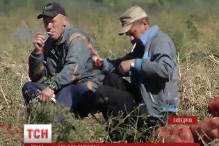 Солдаты в зоне АТО будут лакомиться овощами, выращенными руками заключенных