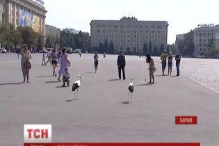 Аисты несколько дней подряд прилетают на центральную площадь Харькова