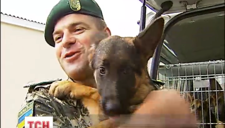 Собакам, которые помогают патрулировать восточную границу, отправляют подкрепление