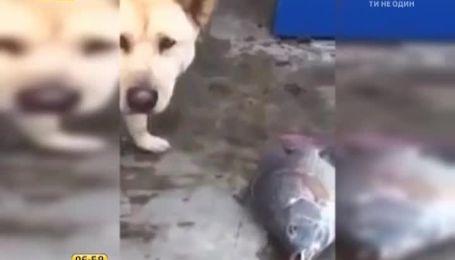 Інтернет зворушив пес, який відчайдушно намагався врятувати рибу