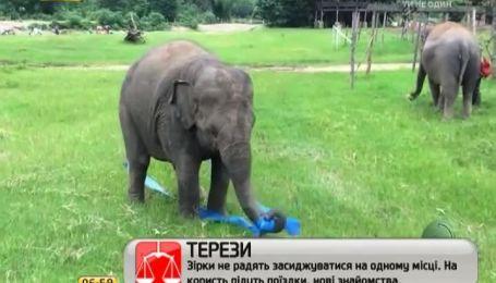 """Слониха-гимнастка из Таиланда """"взорвала"""" Интернет"""