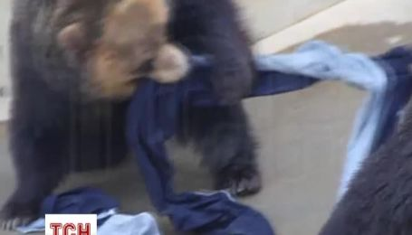 В Японии растет мода на джинсы из разорванной зверями ткани