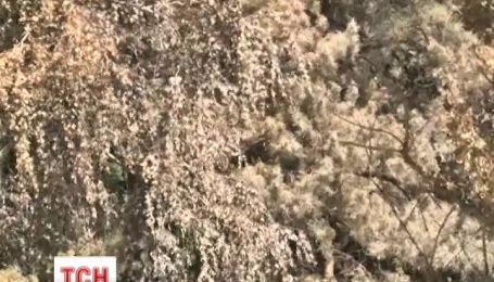 На Київщині невідомі злили 20 тонн екологічно небезпечної  невідомої речовини