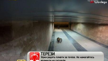Ролик-розыгрыш о пауке-людоеде в Варшаве поразил Интернет