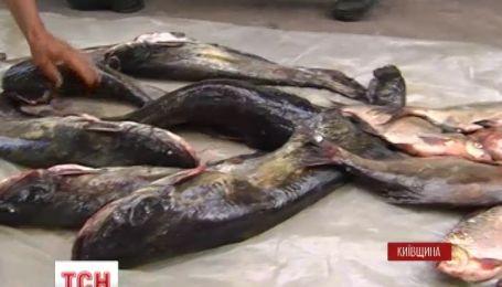 На Киевщине жители разоблачили целую базу браконьеров