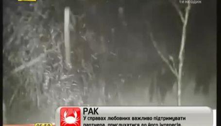 Порятунок кота з дерева у Росії завершився розбитим вікном і обірваними дротами