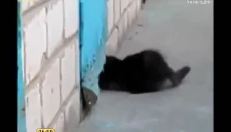 """Кошеня, яке врятувало цуценя з """"полону"""", підкорює Інтернет"""