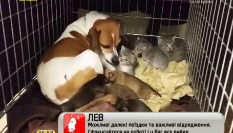 Собака из приюта стала заботливой мамочкой для трех котят