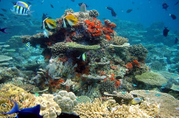 Мальдіви, дайвінг