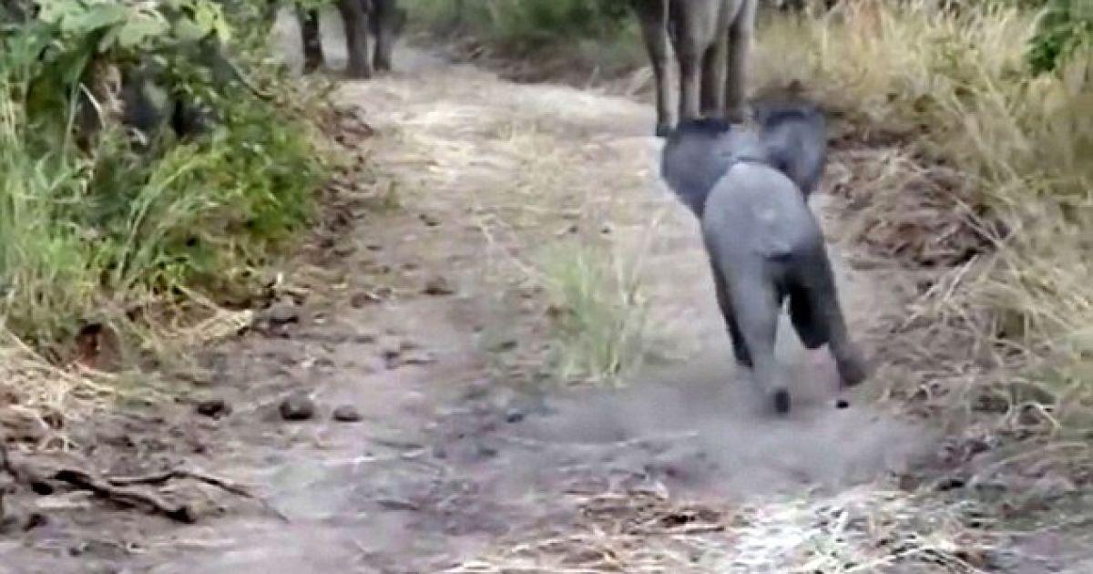 Пользователей Сети растрогал поступок слоненка @ dailymail.co.uk
