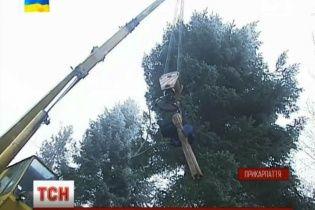 Будущую главную новогоднюю елку Украины не могли полдня вывезти из леса