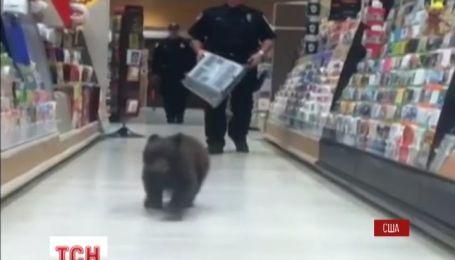 Шестимесячный медвежонок заблудился в аптеке в американском штате Орегон