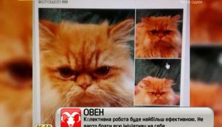 Український композитор Бистряков розгледів у свого кота тризуб на мордочці