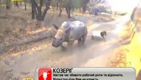 Дружба ягненка и маленького носорога потешила Интернет-пользователей