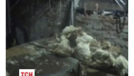Под Киевом правоохранители накрыли подпольный цех по переработке дохлой курицы