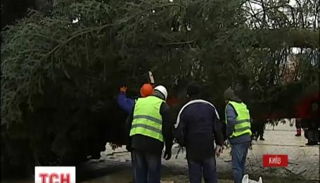 В Киев прибыла главная елка страны