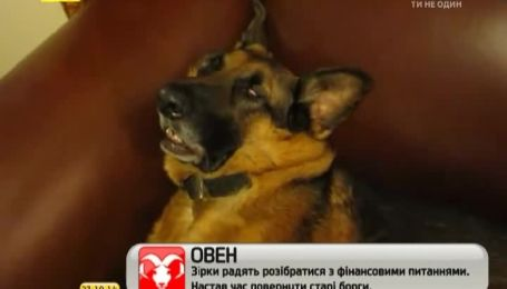 Кумедна морда під час сну зробила з пса Інтернет-зірку