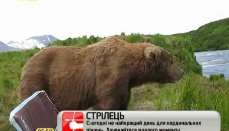 """Сеть покоряет ролик о неожиданных """"посиделках"""" исследователя с медведем"""