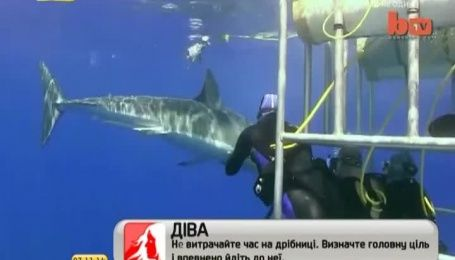 Голландский фотограф отснял селфи с белой акулой