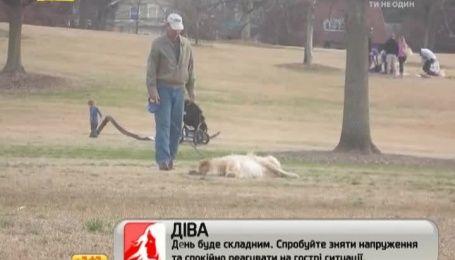 """Хитрий пес щоразу """"помирає"""", щоб тільки не йти з прогулянки додому"""