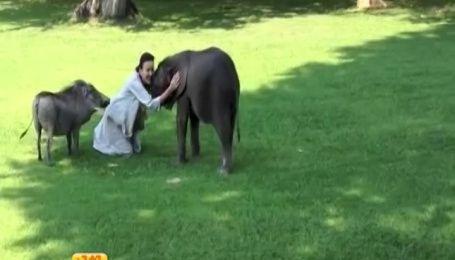 Объятия надзирательницы с кабанчиком и слоненком тронули пользователей Интернета