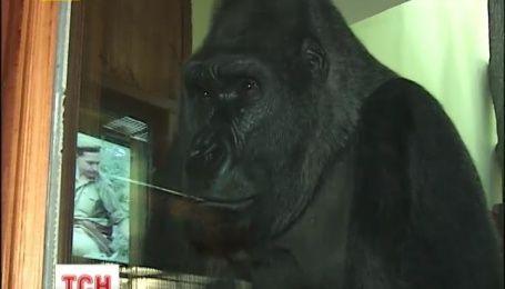 Старожила Київського зоопарку переселяють у вольєр без решіток