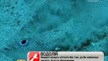"""Рыбка, """"рисующая"""" впечатляющие картины на морском дне, покорила Интернет"""