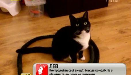 Украинцы испытывают на своих любимцах приманку для котов