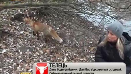 Лисиця з запоріжської Хортиці стала зіркою Інтернету