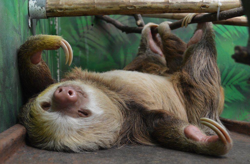 Прикольные картинки ленивцы, мужа